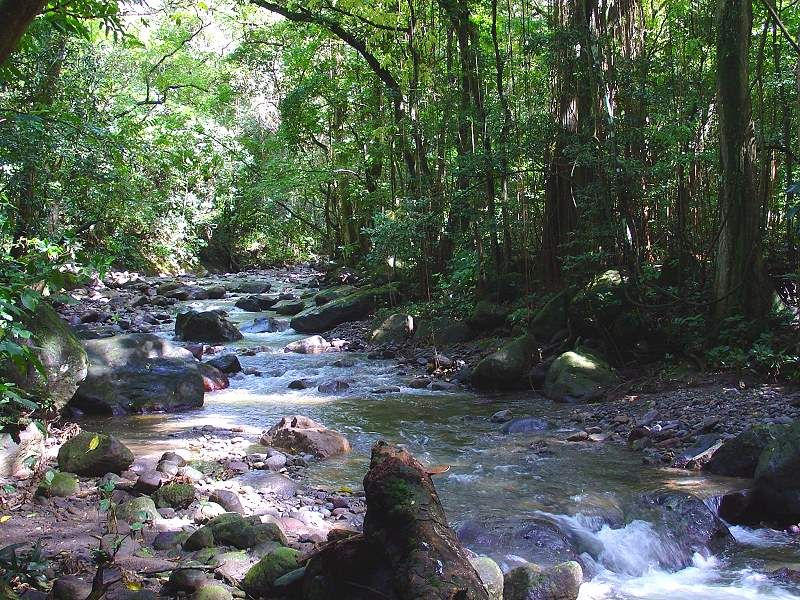 tropical river in Martinique