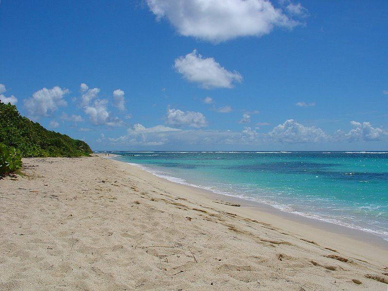 cap macre beaches in Sainte Anne Martinique